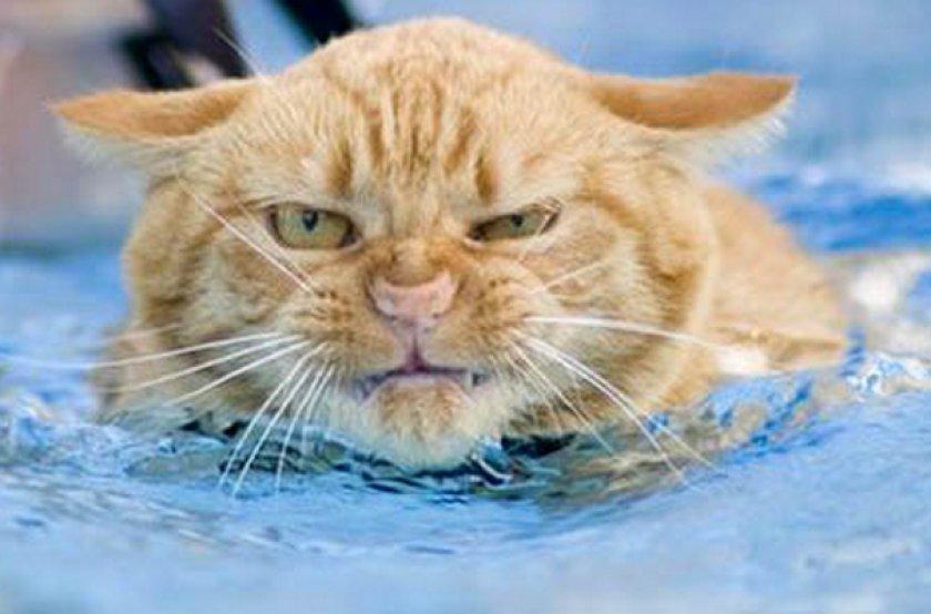 Кот плавает