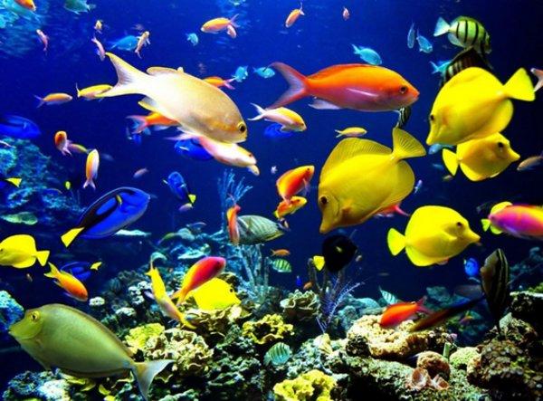 Мирные и хищные рыбки для вашего аквариума: названия, фото, описание