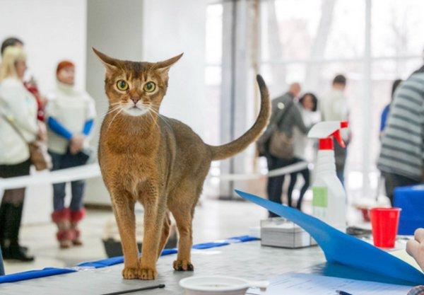 Фелинология. Эксперт-фелинолог: специалист, изучающий кошек Где можно обучиться изучению кошек