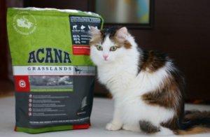 корме для кошек «Акана»